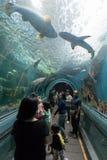 Rayong, TAILANDIA - 9 aprile: Turisti al tunnel acquatico in Th immagine stock