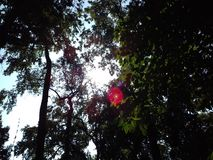 Rayons avec du charme du soleil Image libre de droits