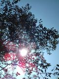 Rayons avec du charme du soleil photographie stock libre de droits