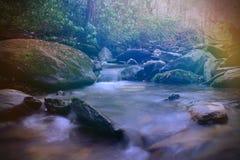 Rayons colorés lumineux de lumière du soleil au-dessus d'une petite rivière de crique dans la forêt naturelle vide Photos stock