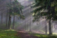 Rayons dans le bois Photographie stock libre de droits