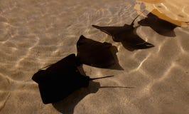 Rayons de 'bat' Photos stock