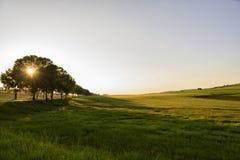 Rayons de champ et de soleil par les arbres Photo stock
