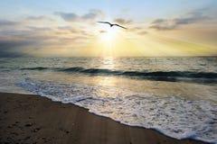 Rayons de coucher du soleil d'océan Image stock