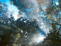 Rayons de lumière Images libres de droits