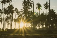 Rayons de lumière du soleil brillant admirablement par le champ images libres de droits