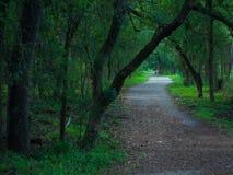 Rayons de lumière du soleil brillant par la voûte de forêt vibrant colorée image libre de droits