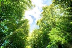 Rayons de lumière du soleil dans la forêt Image libre de droits