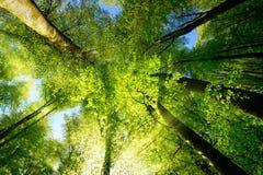 Rayons de lumière du soleil illuminant admirablement des cimes d'arbre photo libre de droits
