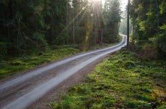Rayons de soleil à la route d'agravel dans une forêt verte Image libre de droits