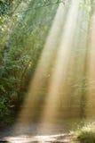 Rayons de soleil. photos libres de droits