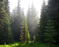 Rayons de soleil brillant sur une clairière verte de forêt photos stock