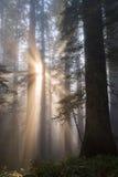 rayons de soleil comme angélique Photo libre de droits