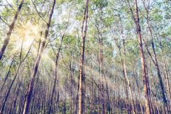 Rayons de soleil dans la forêt image libre de droits