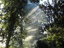 Rayons de soleil entre la fumée et les arbres Images libres de droits