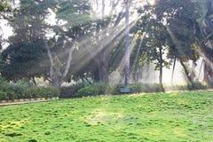 Rayons de soleil par des arbres Photo stock