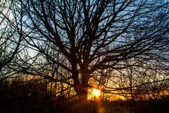 Rayons de soleil par des arbres Photos stock