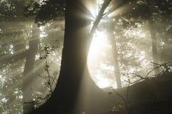 Rayons de soleil par des arbres images stock