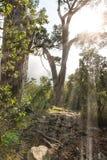 Rayons de soleil par le feuillage Kirstenbosch, sud Af de ville de Capte photos libres de droits