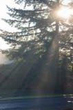 Rayons de soleil rougeoyants abstraits par l'arbre Photos stock