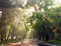 Rayons de Sun à l'aube Images libres de droits