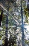 Rayons de Sun Photographie stock libre de droits