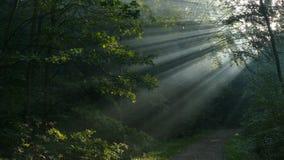 Rayons de Sun au-dessus du chemin Ils brillent pendant le début de la matinée photos libres de droits