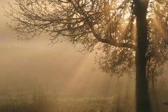 Rayons de Sun coulant dans le matin Photo libre de droits