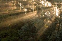 Rayons de Sun dans le début de la matinée d'arbres Images stock