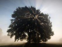 Rayons de Sun dans le paysage brumeux de matin Photos libres de droits
