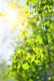 Rayons de Sun par les arbres Images libres de droits