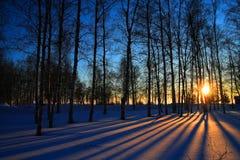 Rayons de Sun par les arbres sans feuilles Photographie stock libre de droits