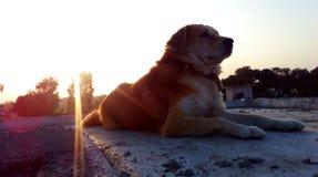 Rayons de Sun sur le chien Photo libre de droits