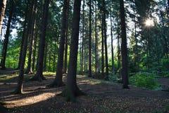 Rayons du soleil dans la forêt Image stock