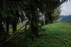 Rayons du soleil de brouillard de rosée de matin en montagnes Photos stock