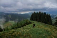 Rayons du soleil de brouillard de rosée de matin en montagnes Images libres de droits