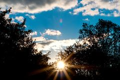 Rayons du soleil par les branches des arbres Photos libres de droits