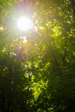 Rayons du soleil par les feuilles Image libre de droits