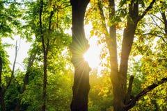 Rayons du soleil par les feuilles Photographie stock