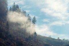 Rayons du soleil traversant le brouillard images libres de droits