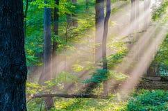Rayons légers de matin Photographie stock