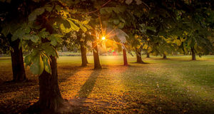 Rayons lumineux de Sun de coucher du soleil dans la forêt Image stock