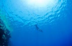 Rayons naviguants au schnorchel d'homme, d'eau et de soleil. Images stock