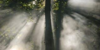 Rayos asombrosos Foto de archivo libre de regalías