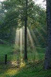 Rayos brillantes del sol Foto de archivo libre de regalías