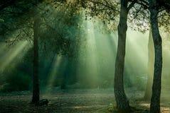 Rayos de la luz imagenes de archivo