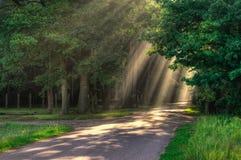 Rayos de la luz Foto de archivo libre de regalías
