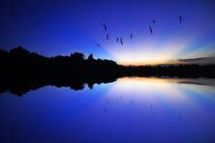 Rayos de la luz con los pájaros de vuelo Fotos de archivo