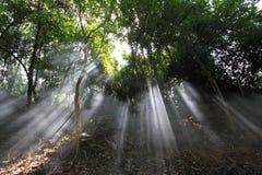 Rayos de la luz del sol Foto de archivo libre de regalías