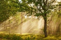 Rayos de la luz del sol imagenes de archivo